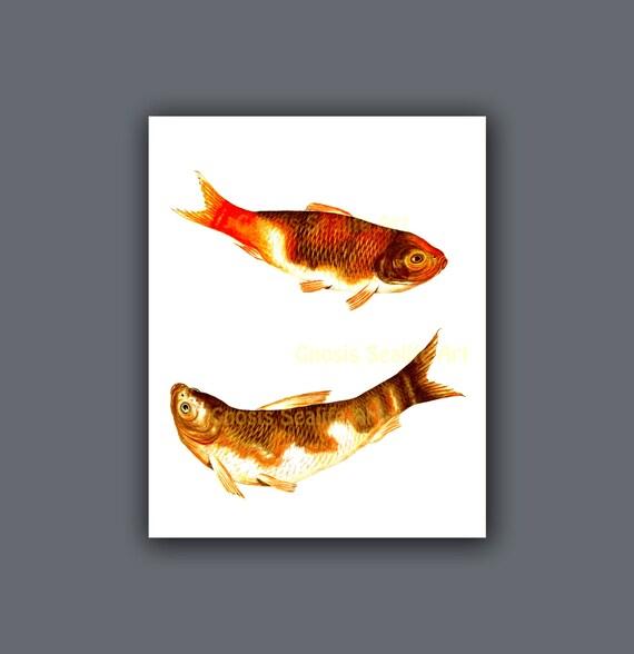 Minimalist art print koi fish painting wall art print 8 for Koi wall art