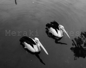 Landscape Beach Photography Wall Art Print - Hungry Pelicans, Tweed River, Australia