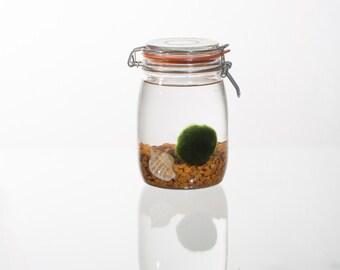 Personalised Large Moss Ball Jar