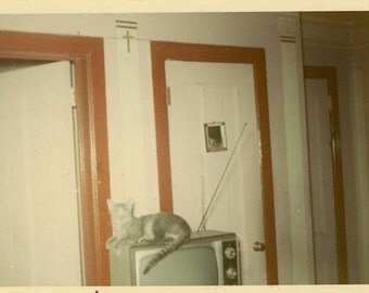 "Vintage Color Photo ""Kitty Television"" Snapshot Antique Photo Old Photograph Found Paper Ephemera Vernacular - 31"