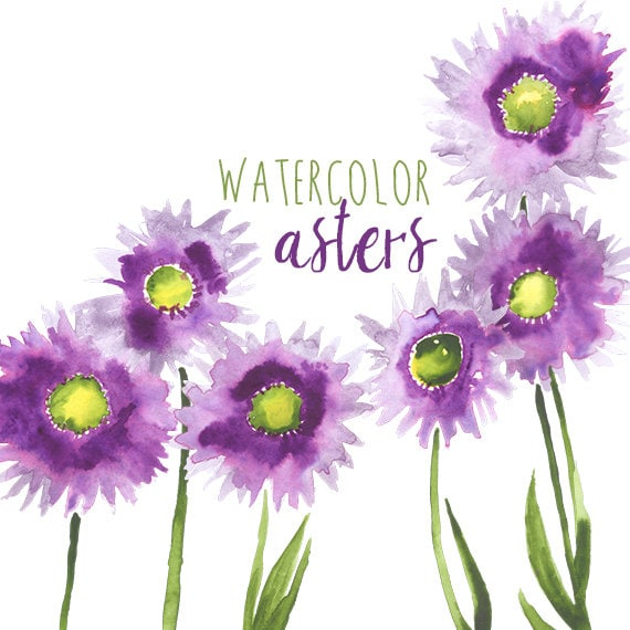Watercolor Asters Purple Flowers Violet Daisies Purple