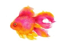 Pink Fish - Archival print of watercolor painting. Art Print. Nature or Animal Illustration. Pink and Yellow.