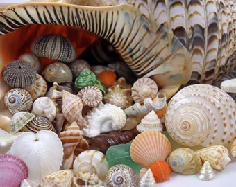 Cornucopia of Shells photo