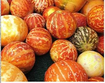 Rare Heirloom Tiger melon - 5 seeds - UK SELLER