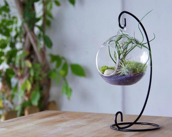 Wrought iron terrarium with Air plants and natural moss