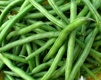 Jade Bush Bean Heirloom Seeds - Non-GMO, Open Pollinated, Untreated