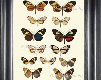 Butterfly Print Art M2 4x6 5x7 8x10 11x14 Beautiful Large Antique Butterflies Chart Illustration Decoration Home Room Wall Decor  to Frame