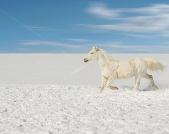 White horse running snow winter photograph home decor decoration wall art animal photo nature photography zen