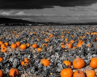 Pumpkin filed