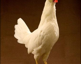 24x36 Poster; White Leghorn Chicken