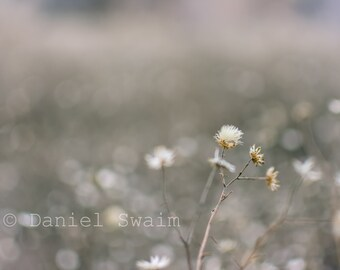 wildflowers photography, Nature photography, Fine art photography, pictures of flowers, bokeh photography, wall art, home decor, photo print