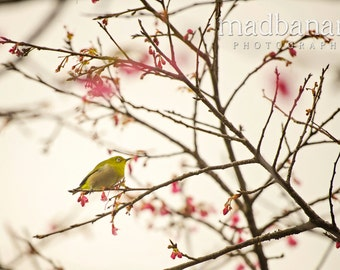 White-eyed Bird & Cherry Blossoms Standout Print