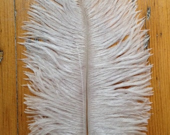 Silver Grey Ostrich Feathers