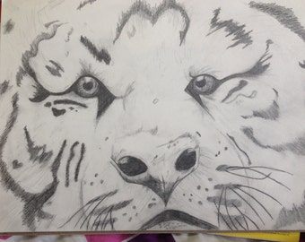 Black and White Tiger Pencil Drawing