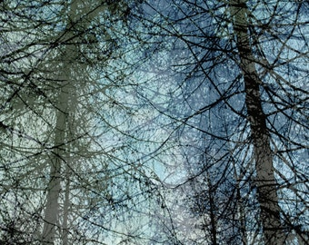 two trees silhouette, blue tint, nature photography