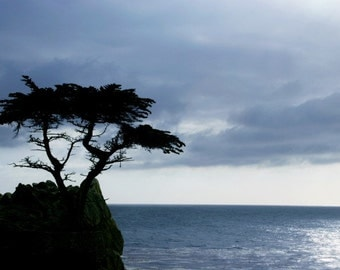 Monterey Tree or Lone Cypress