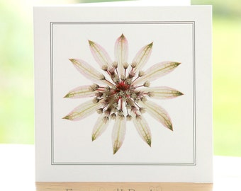 Astrantia flower photograph, blank inside, square greetings card