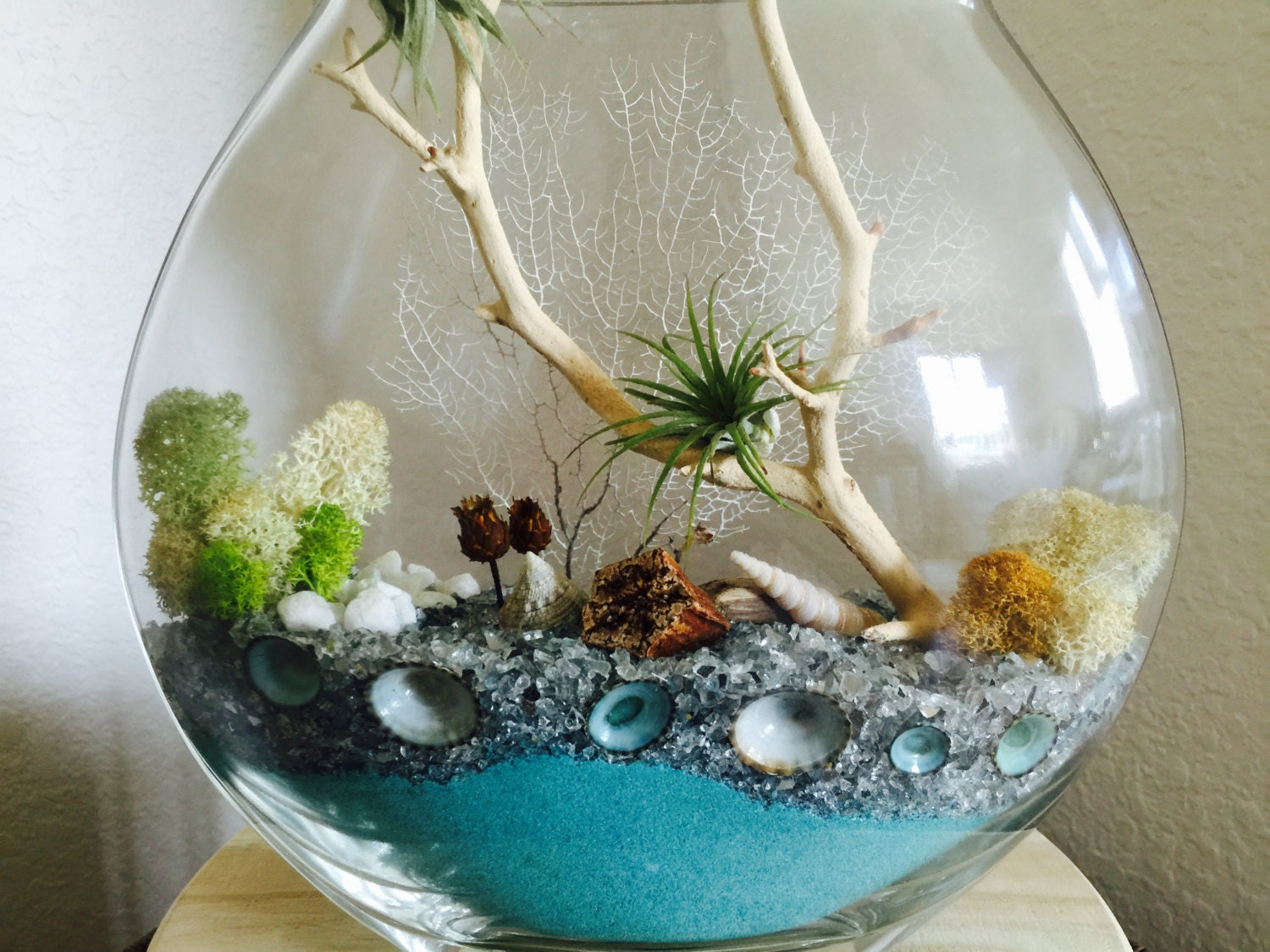 Air Plant Terrarium Gift Blue Terrarium By