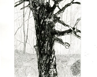 Speckled Tree Etching on hahnemuhle paper 24cm x 18cm