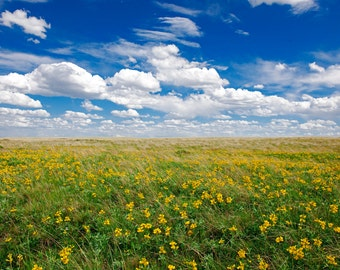 Nature Photograph - High Plains Wildflowers