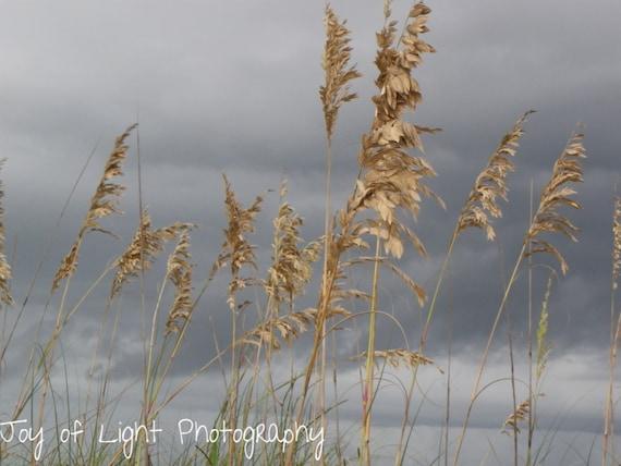 Beach Photography, SeaOats, Coast, Storm Available on Glass