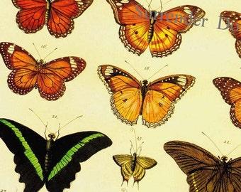 Tropical Butterflies Of The World Seba Entomology Insect Natural History Bug Lithograph Chart Poster Print