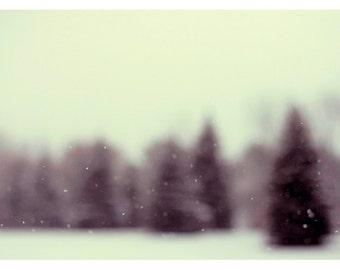Woodland Art - Winter Photograph - Snow Photography - The Last Time It Snowed - Pine Tree - Snow - Winter - Michigan - Original Fine Art