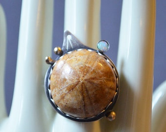 Sea Fossil Ring Made With Real Fossilized Sand Dollar