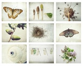 SALE - Naturalist Photography set natural history art botanical butterfly entomology modern rustic white nature art photography prints 5x7