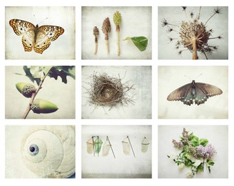 Naturalist Photography set | natural history art | botanical art | butterfly entomology | modern rustic photography | white nature art