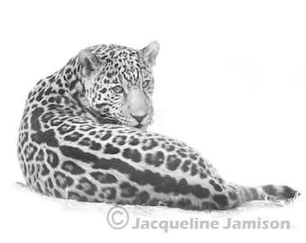 Orginal Art Digital Illustration 8x10, Jaguar Cub, Looking Back, Digital illustration