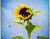 Sunny Honey Bee (Sunflower - 10x10 - Watercolor - Painting - Bee - Wall Decor)