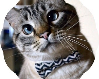 Bow Tie Cat Collar >> Various Prints { 26 Options } Chariots Afire Pet Costume Kitten Dr Who Valentines Meme Funny Gift Accessory Kitty Meow