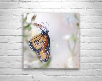 Pink Butterfly Art, Spring Nature Photograph, Soft Nature, Square Art, Queen Butterfly, 5 x 5, 8 x 8, 10 x 10, 12 x 12, Murray Bolesta