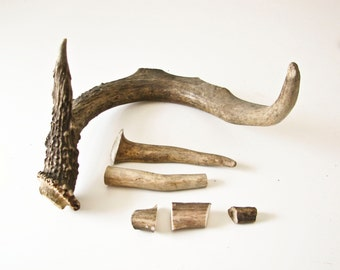 Deer Antlers, Supplies, Materials, Jewelry Parts, Button Parts