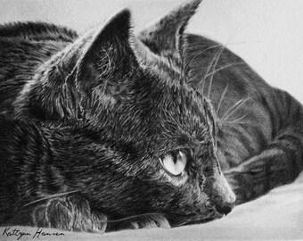 Original Cat Drawing, Eye Spy