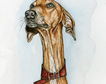 A Little Wish - Azawakh Hound Dog Print - 5 x 7 inch