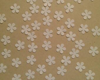 White Shimmer Daisy Flowers
