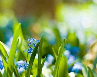 Spring Nature Photography - Vivid Bold Blue Green Nature Print Spring Decor Happy Colorful Art Botanical Print Spring Flowers Bokeh Photo