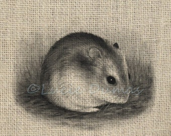 Digital Download Graphic Image Clipart Transfer Hamster 25 Animal from art by Lucie Dumas
