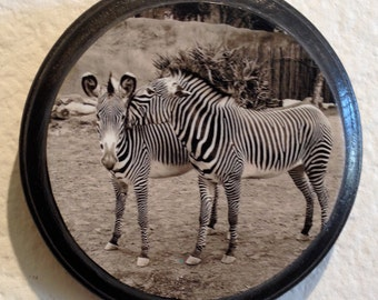 Zebra's Secret , Print on Wood Panel