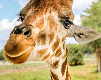 Smiling Giraffe Fine Art Print - Nature, Botanical, Wildlife, Garden, Nursery Decor, Home Decor, Baby, Zen, Gift