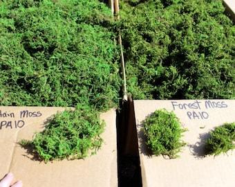 BULK Moss Preserved 5 pound box filled-Sphagnum Moss-Forest Moss-Mountain Moss-Natural Moss-Basket filler-Preserved moss fo...