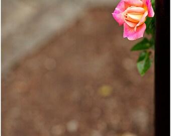 Pink Peach Rose Flower Bouquet Fine Art Canvas wrap -Washington -Pacific Northwest -Garden