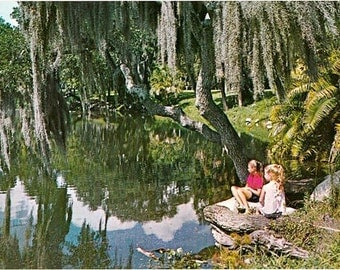 Vintage Florida Postcard - Daydreaming on Orange Lake, New Port Richey (Unused)