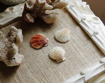 PUSH PINS Beach Thumbtacks Pushpin Decorative Thumb Tack Seashell Sea Shell Office Supplies Unique Gift Idea Cork Board Cubicle Decor