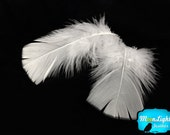 Turkey Feathers, 1 Pack - WHITE Turkey Flat Plumage Body Feathers 0.50 oz. : 135