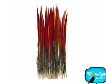 """Pheasant feathers, 10 Pieces- 8-10"""" Golden Pheasant Red Tips Loose Feathers : 3658"""