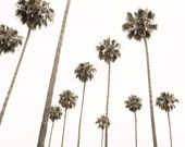 Palm Trees Photography Wall Art - Palm Tree Images - Large Nature Wall Decor - California Photography Fine Art Print - FREE SHIPPING