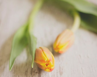 Flower photograph - Spring tulips fine art photo - spring photo, yellow orange tulips, spring art, shabby chic home decor
